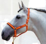 Double nylon headcollar with anti-chafe lining